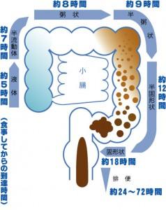 大腸という器官の働き