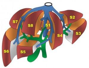 肝臓の区域