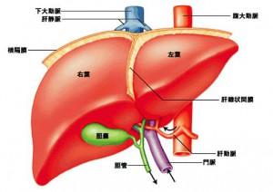 肝内胆管がん(胆管細胞がん)