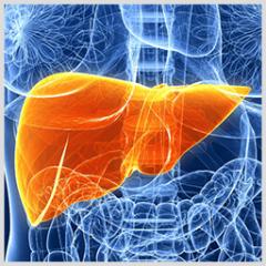 肝臓がん免疫療法
