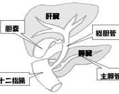 肝内胆管がん(胆管細胞がん)のステージ