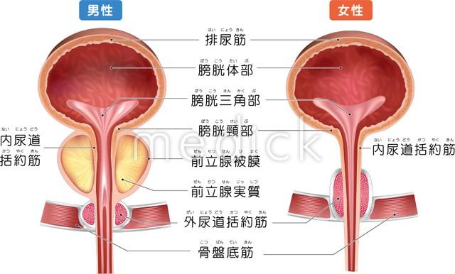 膀胱がんは再発しやすい