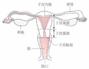 子宮体がんのタイプ1とタイプ2