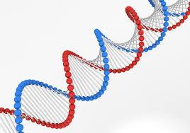 DNAkouzou