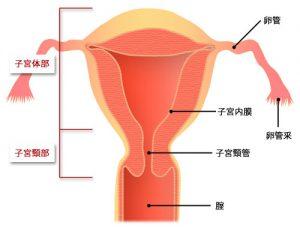 子宮頸がんステージ2B期の治療や生存率