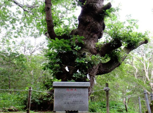 那須温泉神社の御神木