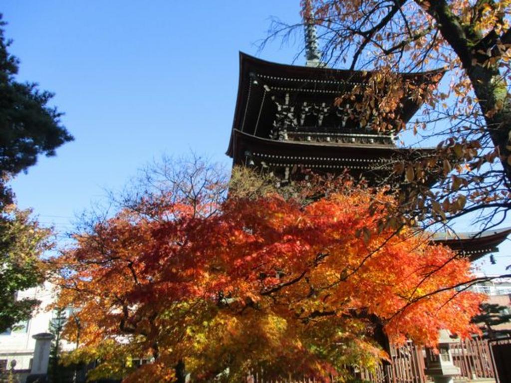 醫王山 飛騨国分寺の三重塔とイチョウ