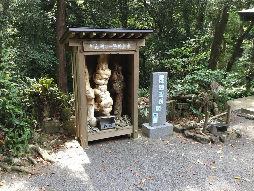 高知県室戸市 金剛頂寺のがん封じ椿の木