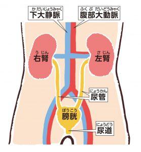 腎臓がんで腎臓を摘出するという判断をする前に。腎臓の機能