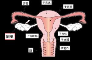 卵巣がんのステージ別5年生存率